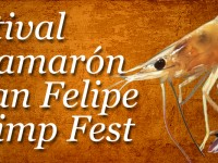 2014 San Felipe Shrimp Festival starts November 7th