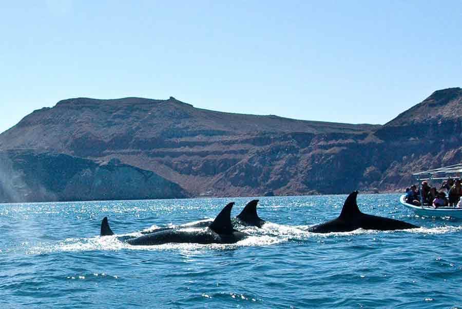 photo_whale-watching-in-baja
